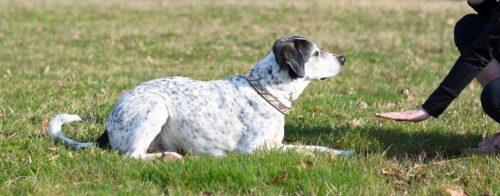 Koira on omistajan merkistä mennyt maahan.