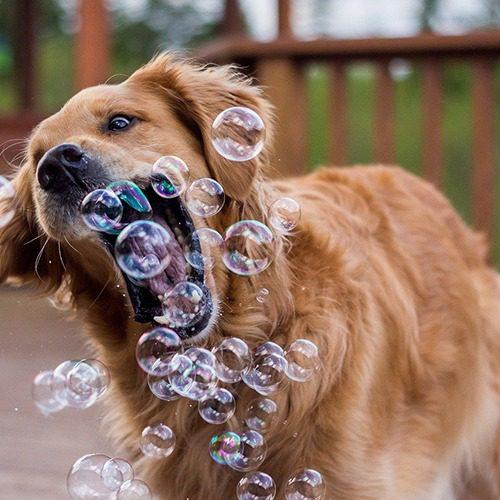 Koira haukkailee saippuakuplia ilmasta.