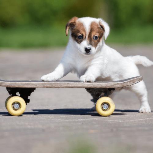 Koiranpentu nojaa skeittilautaan.