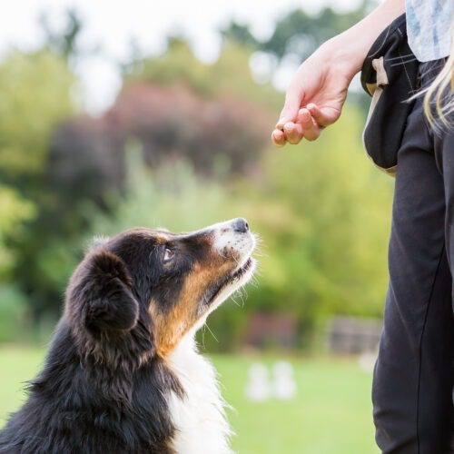 Tutustu koirakouluun